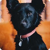 Adopt A Pet :: Love - Portland, OR