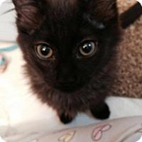 Adopt A Pet :: Hank - Stafford, VA