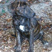 Adopt A Pet :: Finn - fostered in WI - Pewaukee, WI