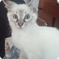 Adopt A Pet :: LittleMissy - North Highlands, CA