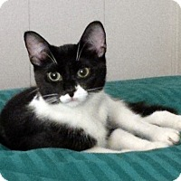 Adopt A Pet :: Ethnia - Mississauga, Ontario, ON
