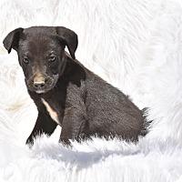 Adopt A Pet :: Carlin - Groton, MA