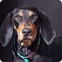 Adopt A Pet :: Heather - Sudbury, MA