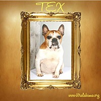 Adopt A Pet :: Tex - Alabaster, AL