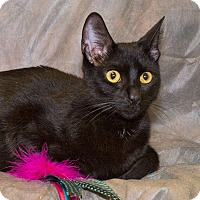 Adopt A Pet :: Molly - Elmwood Park, NJ