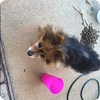 Adopt A Pet :: Cyndi - Mahopac, NY