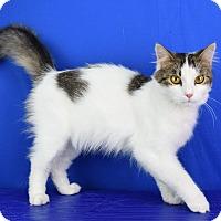 Adopt A Pet :: Karmen - Carencro, LA