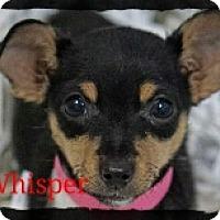 Adopt A Pet :: Whisper - Old Saybrook, CT