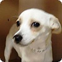 Adopt A Pet :: Indy - Las Vegas, NV