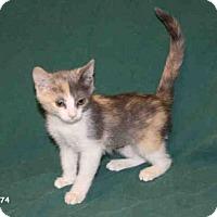 Adopt A Pet :: *FELICITY - Hanford, CA