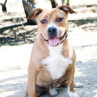 Adopt A Pet :: Ginger - Lincoln, CA