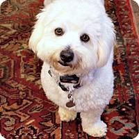 Adopt A Pet :: Lucky - Redondo Beach, CA