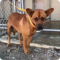 Shepherd (Unknown Type) Mix Dog for adoption in Lyndhurst, New Jersey - EDGAR
