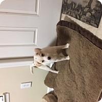 Adopt A Pet :: Angel - Media, PA
