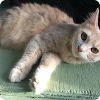 Adopt A Pet :: Fiona 2 - Savannah, GA