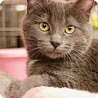Adopt A Pet :: Annabel - Cerritos, CA