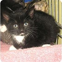 Adopt A Pet :: Dobbie - Acme, PA