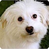 Adopt A Pet :: Ernie - Mission Viejo, CA