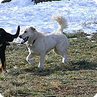 Adopt A Pet :: charmin - cameron, MO