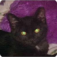 Adopt A Pet :: Andy - Jenkintown, PA