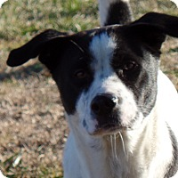 Adopt A Pet :: Maddie - Woodlawn, TN