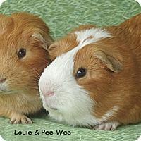 Adopt A Pet :: Louie & Pee Wee - Santa Barbara, CA