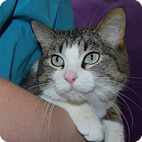 Adopt A Pet :: Idelia - Red Wing, MN