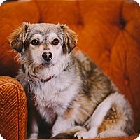 Adopt A Pet :: Gertrude - Portland, OR