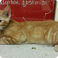 Adopt A Pet :: Pooh - Phoenix, AZ