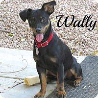 Adopt A Pet :: Wally - Scottsdale, AZ
