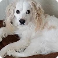 Adopt A Pet :: Henry 15-022 - Parker, CO