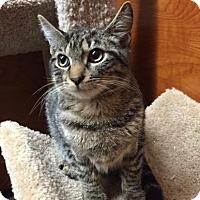 Adopt A Pet :: Neptune - Long Beach, NY