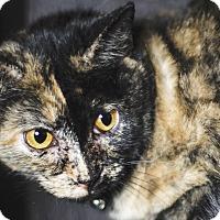 Adopt A Pet :: Noelle - Chicago, IL