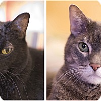 Adopt A Pet :: Liam & Licorice - Chicago, IL