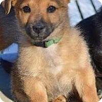 Adopt A Pet :: Gratz *AVAILABLE 4/13/16* - Pleasant Plain, OH