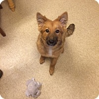 Adopt A Pet :: Camilla - Fair Oaks Ranch, TX