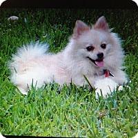 Adopt A Pet :: Sweets - conroe, TX