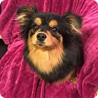 Adopt A Pet :: Cocoa - Boise, ID