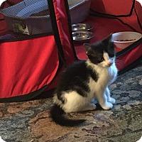 Adopt A Pet :: Padme - Millersville, MD