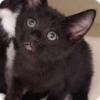Adopt A Pet :: Simone - Key Largo, FL