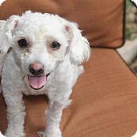 Adopt A Pet :: Tiffany - tampa, FL
