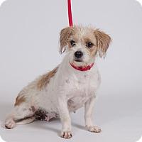 Adopt A Pet :: Hannah - Jupiter, FL