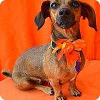 Adopt A Pet :: Cori - Chattanooga, TN