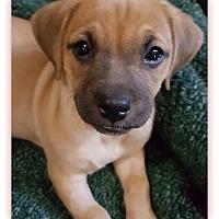 Adopt A Pet :: Kip - Plainfield, IL