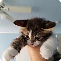 Adopt A Pet :: JoJo - Los Angeles, CA