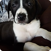Adopt A Pet :: Zachary - Cleveland, OH