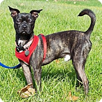 Adopt A Pet :: Nestle (HP) - Livonia, MI
