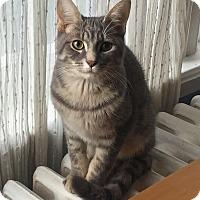 Adopt A Pet :: Percy - Toronto, ON
