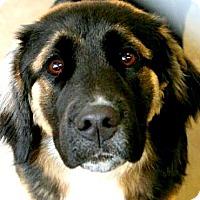 Adopt A Pet :: JONAS(WOW!! GORGEOUS PUPPY! - Wakefield, RI