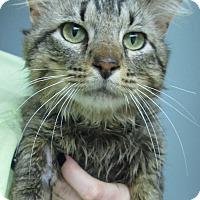 Adopt A Pet :: Sandy - Menomonie, WI